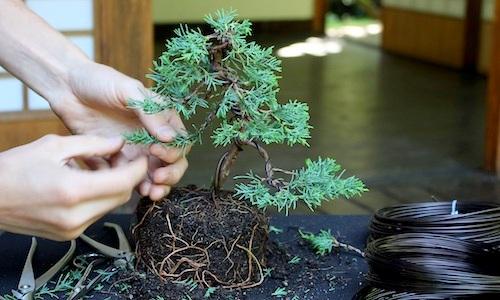 분재 나무를 만드는 방법