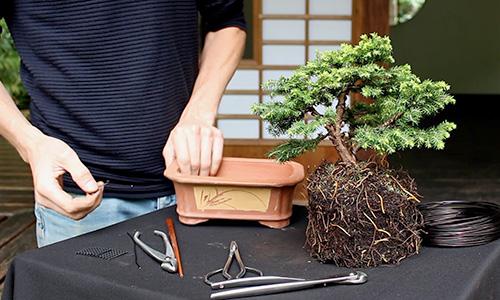 분재 나무 만드는 방법